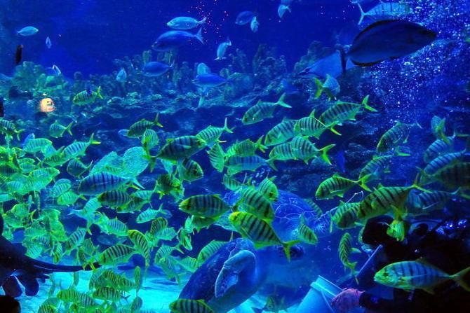 Coral Reefs - Kuala Lumpur Convention Center